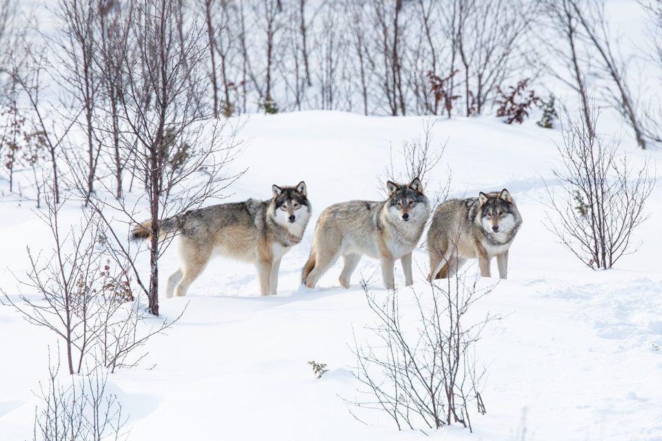 Defining a Wildlife Conservationist