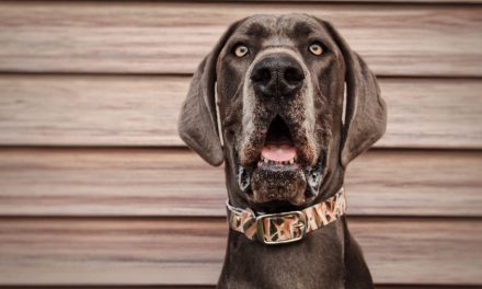 C4 Belts & Dog Collars' Unique Partnership with Mossy Oak